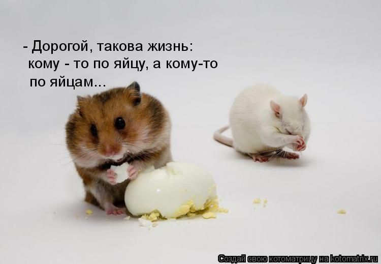 Котоматрица: - Дорогой, такова жизнь: кому - то по яйцу, а кому-то по яйцам...