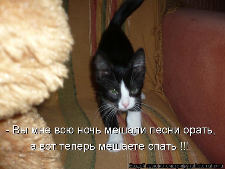 Котоматрица: - Вы мне всю ночь мешали песни орать, а вот теперь мешаете спать !!!