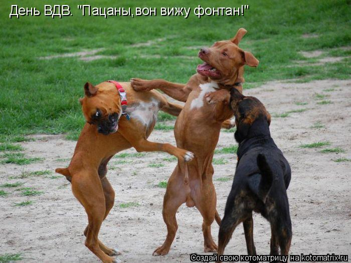 "Котоматрица: День ВДВ. ""Пацаны,вон вижу фонтан!"""