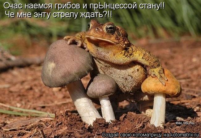 Котоматрица: Счас наемся грибов и прЫнцессой стану!! Че мне энту стрелу ждать?!!