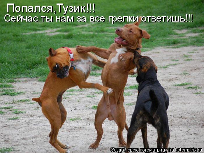 Котоматрица: Попался,Тузик!!! Сейчас ты нам за все грелки ответишь!!!