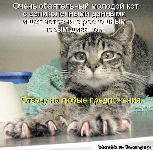 Котоматрица: Очень обаятельный молодой кот с великолепными данными ищет встречи с роскошным  новым диваном. Отвечу на любые предложения.
