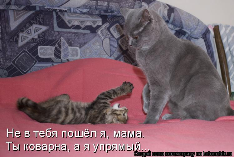 Котоматрица: Не в тебя пошёл я, мама. Ты коварна, а я упрямый...