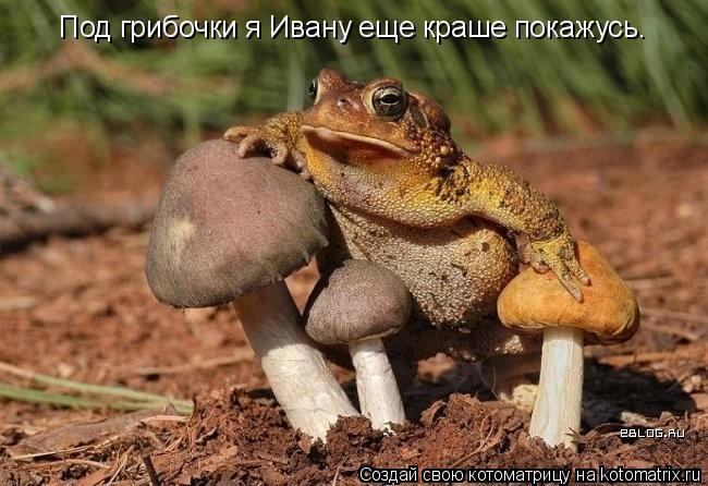 Котоматрица: Под грибочки я Ивану еще краше покажусь.