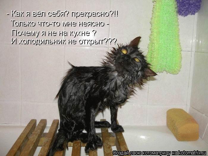 Котоматрица: - Как я вёл себя? прекрасно?!! Только что-то мне неясно - Почему я не на кухне ? И холодильник не открыт???...