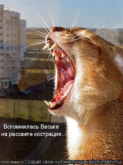 Котоматрица: Вспомнилась Ваське  на рассвете кострация...