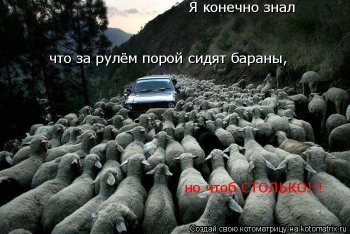 Котоматрица: Я конечно знал что за рулём порой сидят бараны, но чтоб СТОЛЬКО!!!
