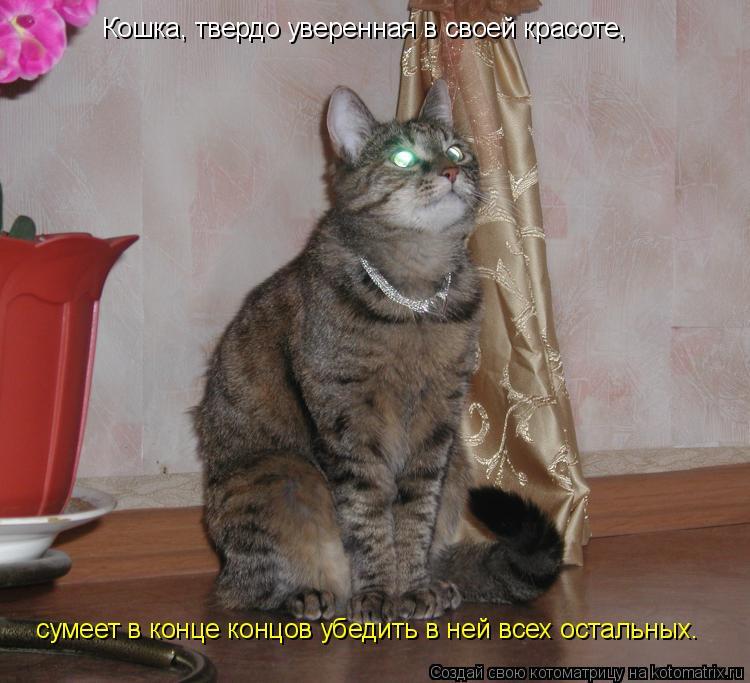 Котоматрица: Кошка, твердо уверенная в своей красоте,  сумеет в конце концов убедить в ней всех остальных.