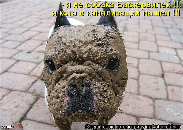 Котоматрица: - я не собака Баскервилей !!! я кота в канализации нашел !!!