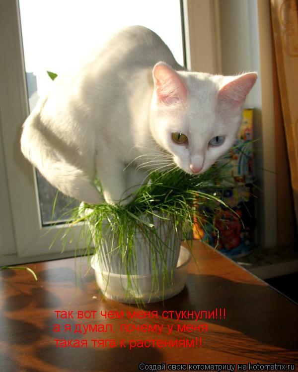 Котоматрица: так вот чем меня стукнули!!! а я думал, почему у меня такая тяга к растениям!!