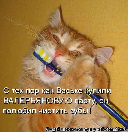 Котоматрица: С тех пор как Ваське купили ВАЛЕРЬЯНОВУЮ пасту, он  полюбил чистить зубы!