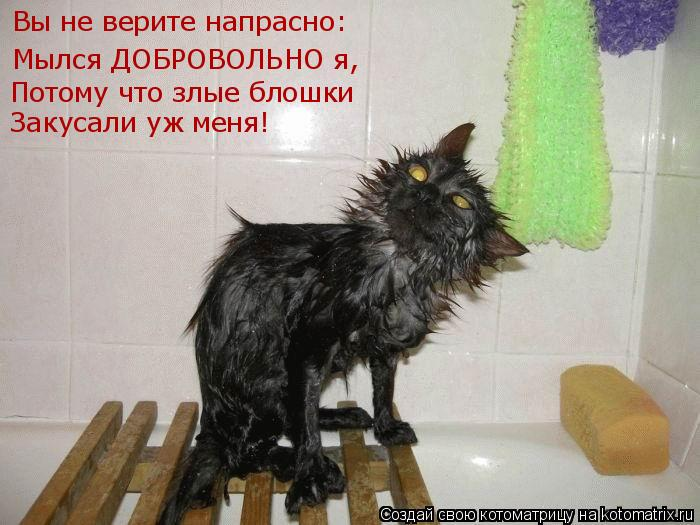 Котоматрица: Вы не верите напрасно: Мылся ДОБРОВОЛЬНО я, Потому что злые блошки Закусали уж меня!