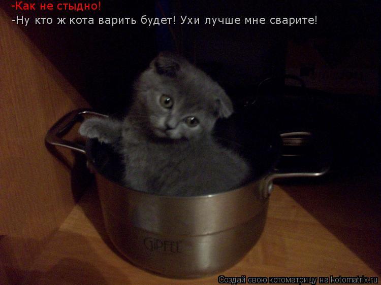 Котоматрица: -Ну кто ж кота варить будет! Ухи лучше мне сварите! -Как не стыдно!