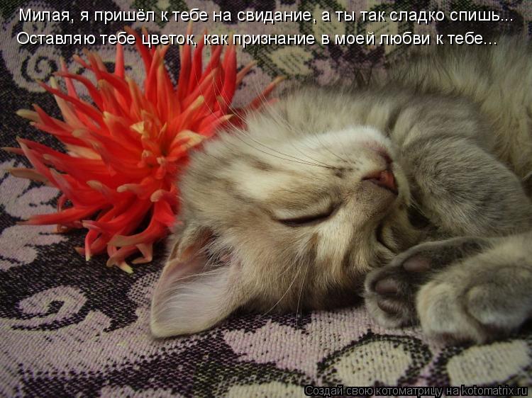 Котоматрица: Милая, я пришёл к тебе на свидание, а ты так сладко спишь... Оставляю тебе цветок, как признание в моей любви к тебе...