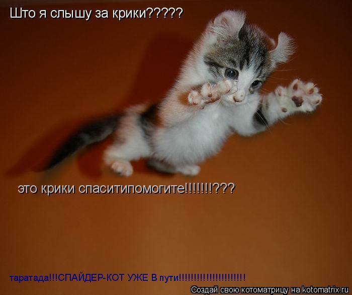 Котоматрица: Што я слышу за крики????? это крики спаситипомогите!!!!!!!??? таратада!!!СПАЙДЕР-КОТ УЖЕ В пути!!!!!!!!!!!!!!!!!!!!!!