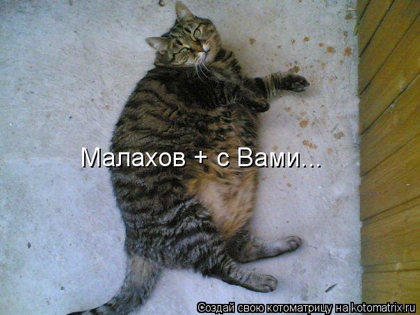Котоматрица: Малахов + с Вами...