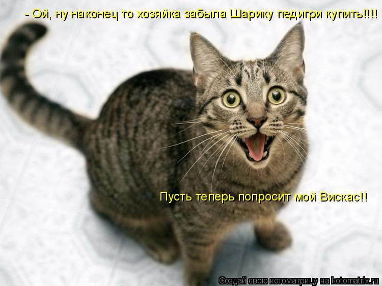 Котоматрица: - Ой, ну наконец то хозяйка забыла Шарику педигри купить!!!! Пусть теперь попросит мой Вискас!!