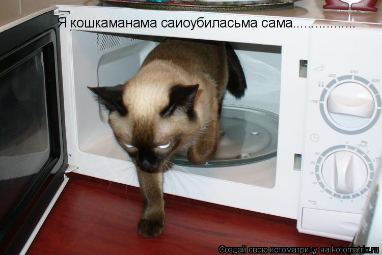 Котоматрица: Я кошкаманама саиоубиласьма сама.................