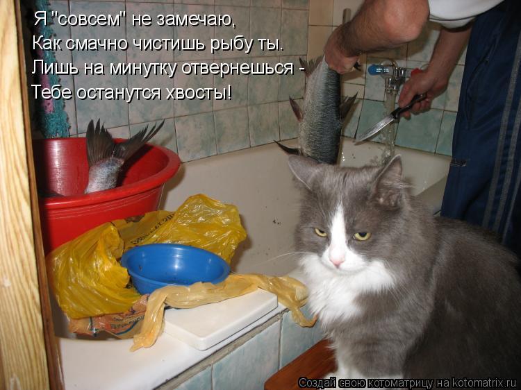 """Котоматрица: Я """"совсем"""" не замечаю,  Как смачно чистишь рыбу ты… Лишь на минутку отвернешься - Тебе останутся хвосты!"""
