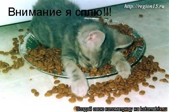 Котоматрица: Внимание я сплю!!!