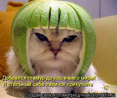 Котоматрица: Добрался гламур до кошачьего мира! Я стильный себе паричок прикупила