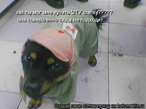 Котоматрица: как ты мог мне купить ЭТУ шапку????? как ты мог мне купить ЭТУ шапку????? она совершенно сюда не подходит.... она совершенно сюда не подходит....