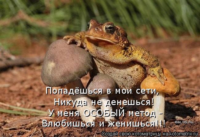 Котоматрица: Попадёшься в мои сети, Никуда не денешься! У меня ОСОБЫЙ метод - Влюбишься и женишься!!!