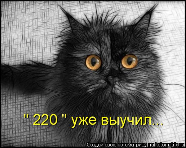 """Котоматрица: """" 220 """" уже выучил..."""