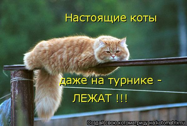 Котоматрица: Настоящие коты даже на турнике - ЛЕЖАТ !!!