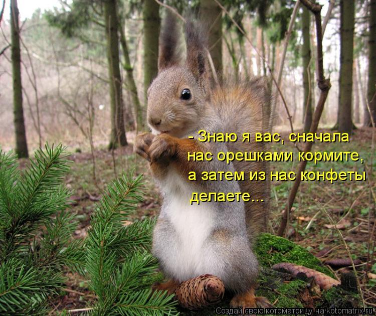 Котоматрица: - Знаю я вас, сначала  нас орешками кормите, а затем из нас конфеты делаете...