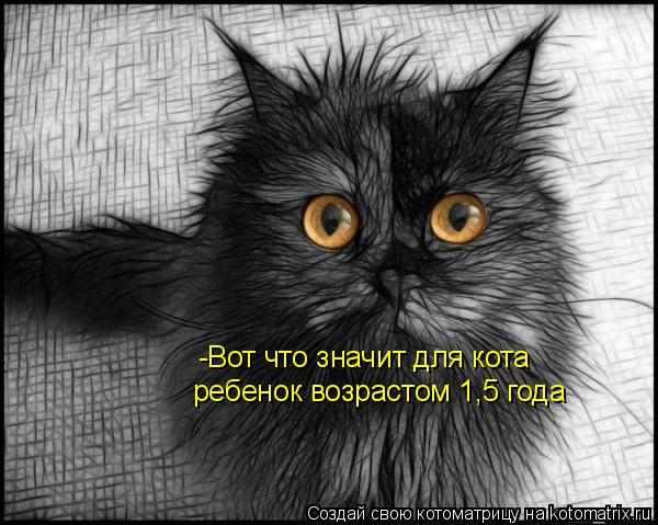 Котоматрица: -Вот что значит для кота ребенок возрастом 1,5 года