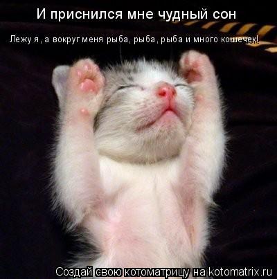 Котоматрица: И приснился мне чудный сон Лежу я, а вокруг меня рыба, рыба, рыба и много кошечек!