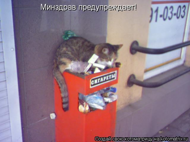 Котоматрица: Минздрав предупреждает!