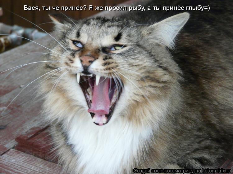 Котоматрица: Вася, ты чё принёс? Я же просил рыбу, а ты принёс глыбу=)