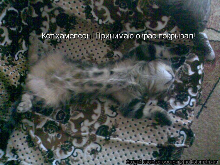 Котоматрица: Кот хамелеон! Принимаю окрас покрывал!