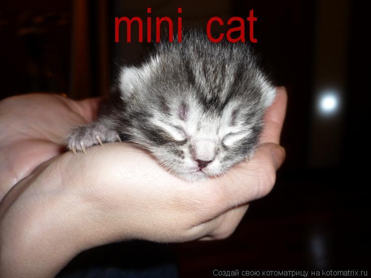 Котоматрица: mini  cat