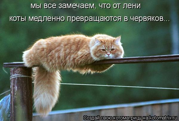 Котоматрица: мы все замечаем, что от лени коты медленно превращаются в червяков...