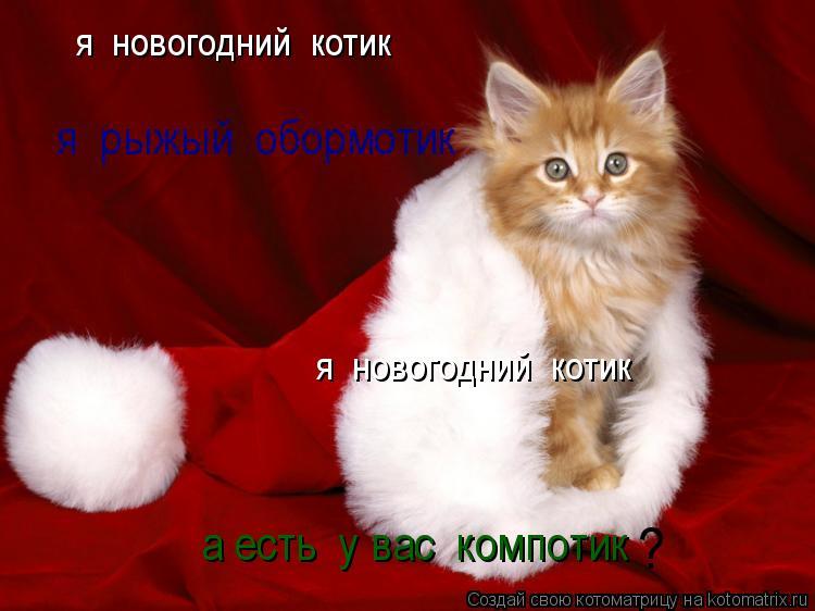 Котоматрица: я  новогодний  котик я  новогодний  котик я  рыжый  обормотик а есть  у вас  компотик ?
