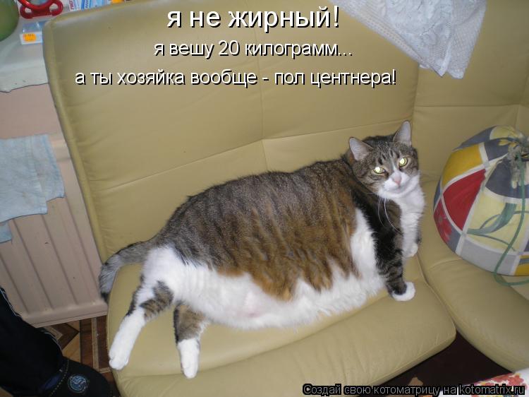 Котоматрица: я не жирный! я вешу 20 килограмм... а ты хозяйка вообще - пол центнера!
