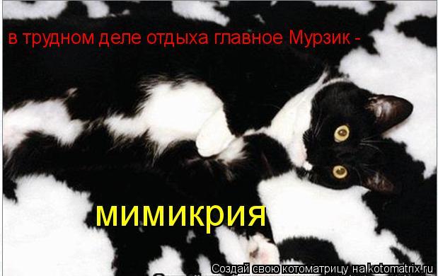 Котоматрица: в трудном деле отдыха главное Мурзик -  мимикрия