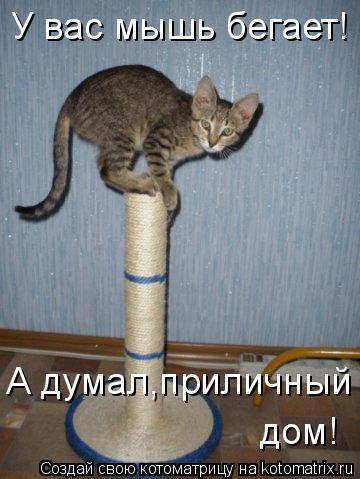 Котоматрица: У вас мышь бегает! А думал,приличный  дом!