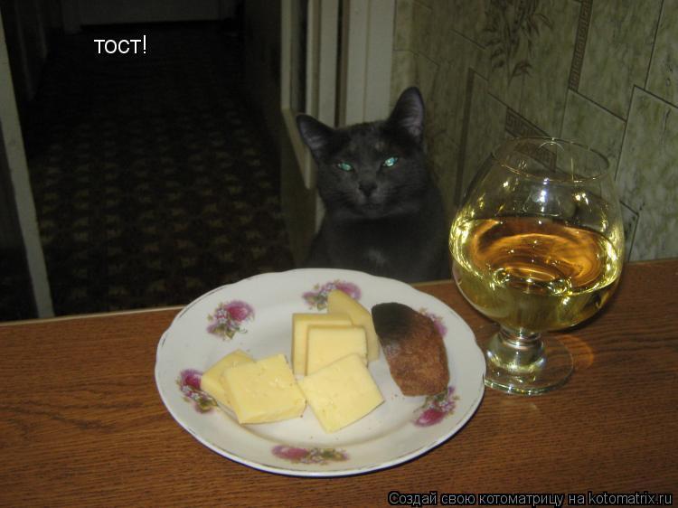 Котоматрица: тост!