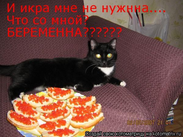 Котоматрица: И икра мне не нужнна.... Что со мной? БЕРЕМЕННА??????