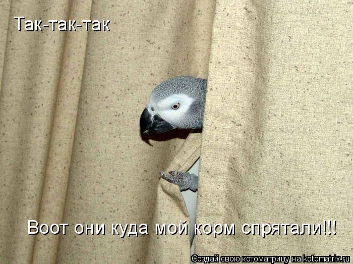 Котоматрица: Так-так-так Воот они куда мой корм спрятали!!!