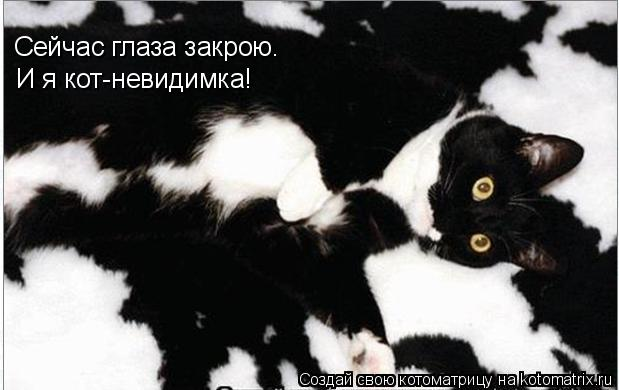 Котоматрица: Сейчас глаза закрою. И я кот-невидимка!