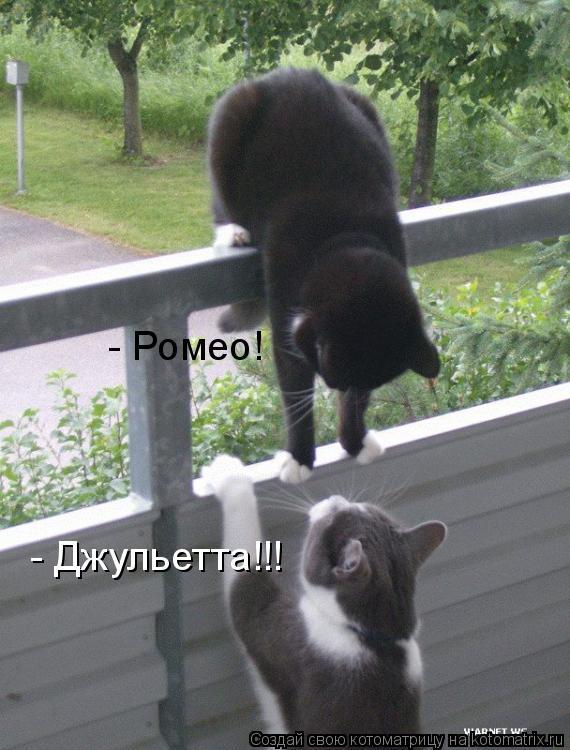 Котоматрица: - Ромео!  - Джульетта!!!