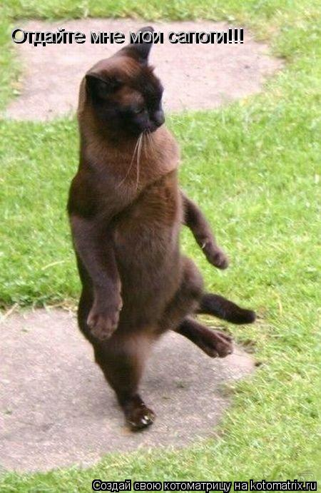 Котоматрица: Отдайте мне мои сапоги!!! Отдайте мне мои сапоги!!!