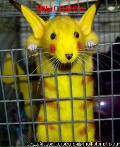 Котоматрица: крысомон