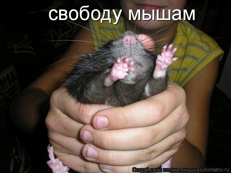 Котоматрица: свободу мышам