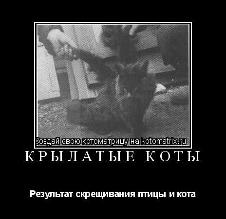 Котоматрица: Крылатые коты Результат скрещивания птицы и кота